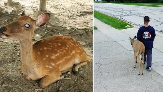 Kindhearted boy helps blind deer every day before school. Their bond is incredible