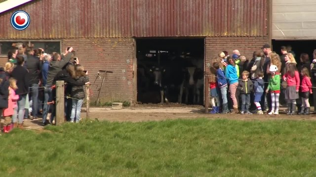 COWS ARE KEPT INSIDE BARN FOR 6 MONTHS, CAPTURED FOOTAGE WHEN SET FREE GOES VIRAL