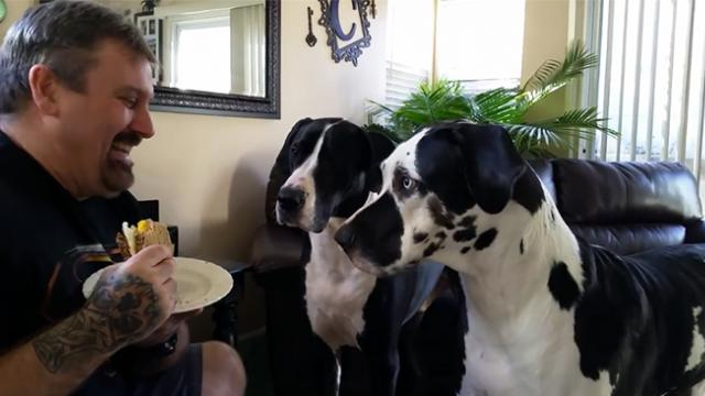 Stubborn dog wouldn't give up begging his owner for a piece of sandwich