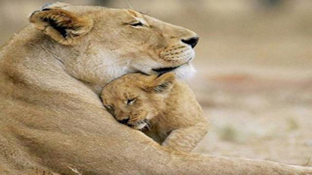 18 heartwarming snapshots of mother and babies from the animal kingdom
