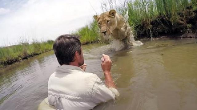 Man reunites with lioness seven years after saving her life – her reaction is priceless