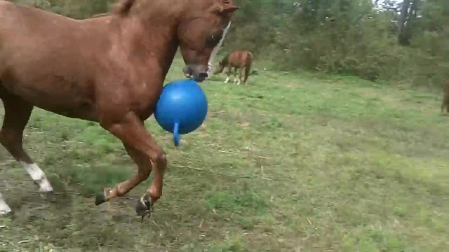 Fun at the farm - young horse playing with ball