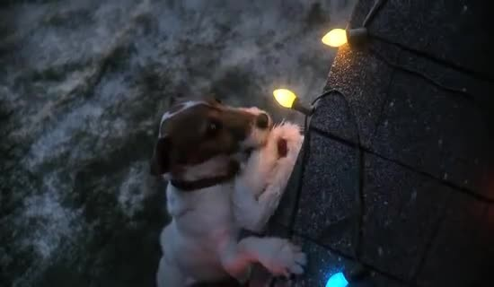 Dog Waits All Night For Santa, And His Christmas Wish Comes True