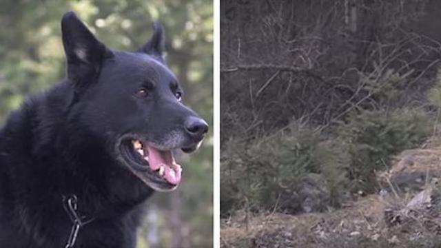 Dog fights off coyotes, protects teen for two days after terrible car crash