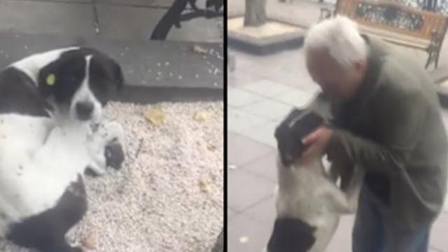 Owner finds dog in the street after three year search