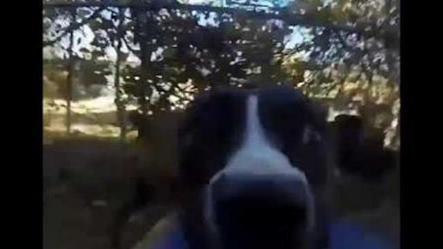 Clever dog steals owners Go-Pro camera and it's the funniest thing ever