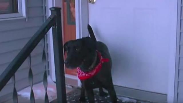 87-Year-Old Woman Says Dog Saved Her During Cold Snap