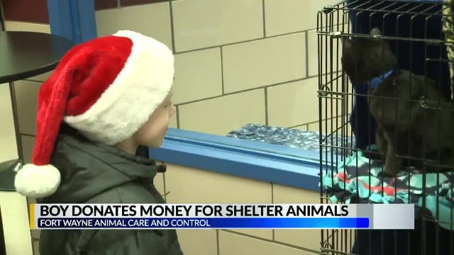 Little Boy Empties Piggy Bank, Gives Every Cent To Help Homeless Animals