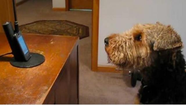 Dog phones mom when he misses her. She dies of laughter when she hears him 'sing' to her