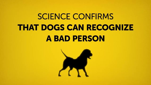 Scientists confirm that dogs recognize a bad person when they see one