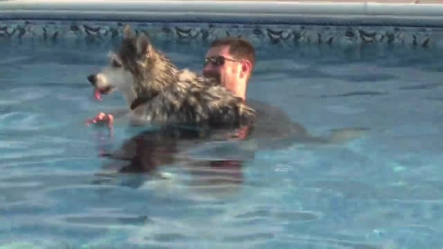 Man Brings His Paralysed Senior Dog Into Pool – The Result Is Bringing Everyone To Tears