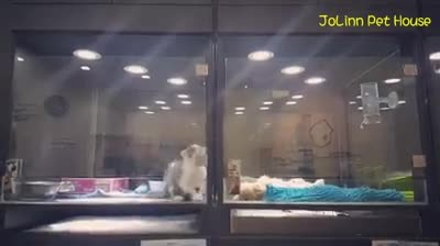 Puppy is lonely at pet store overnight. Now watch what the kitten does next...OMG!