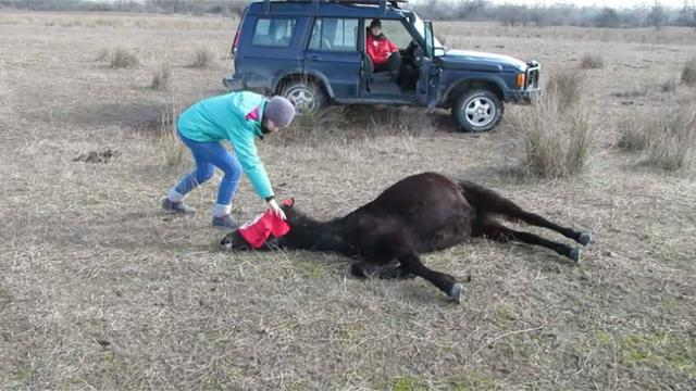 Man sets free chained horse but has no clue he's about to get