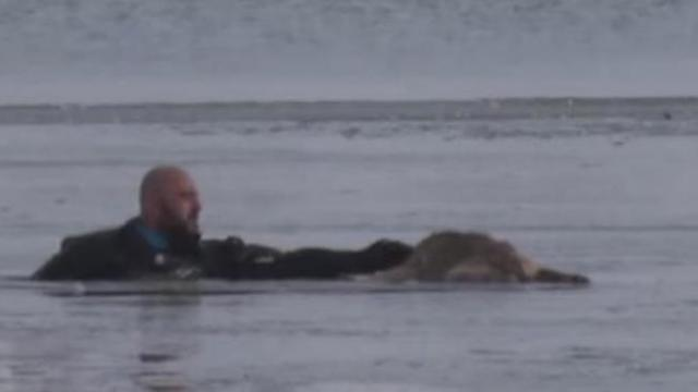 Chilling moment dog passed out on sheet of ice and is pulled to safety barely alive