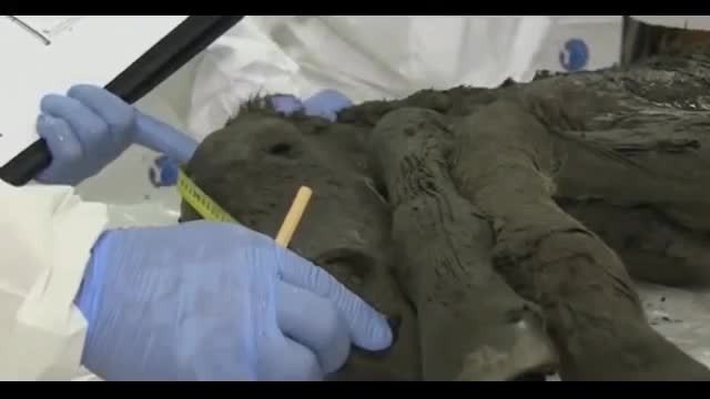 40,000-Year-Old Foal Of Now-Extinct Horse Species Found Perfectly Preserved