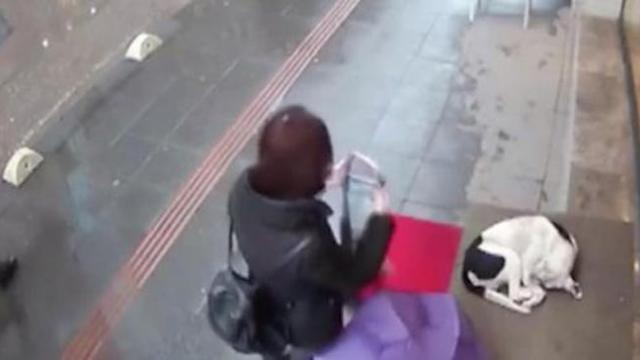 Woman sees stray dog shivering in the cold and gives him her scarf