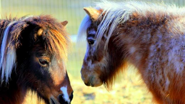 New York Farm Focuses on Wellness 'in the company of horses'