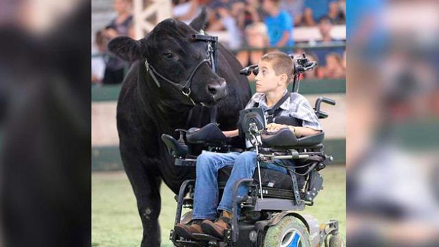Boy in wheelchair has neurological disorder, forms inexplicable bond with 1,400 pound cow