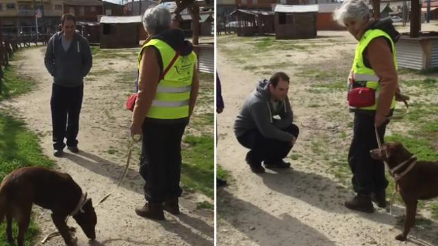 Long lost dog bursts out in joy after she realizes the man in front of her is her dad