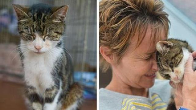 This elderly cat found her way back home after going missing for 13 years