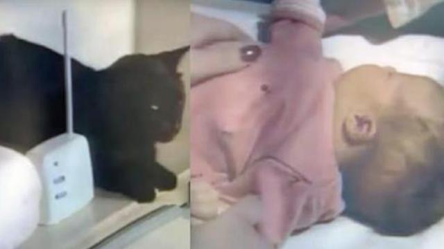 Kitty makes strange noises over baby monitor – mom checks baby's bedroom and leaps for the phone