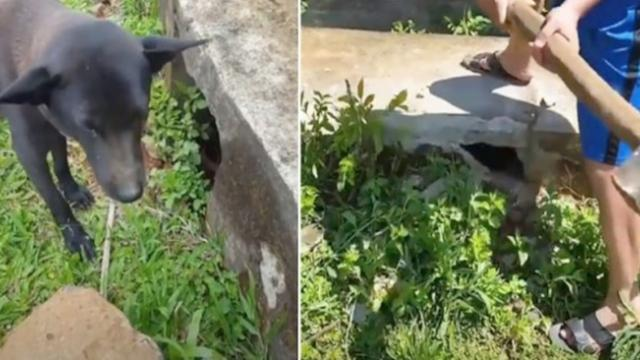 Touching rescue: Dog calls human over to storm drain and 'asks' for help saving her pups