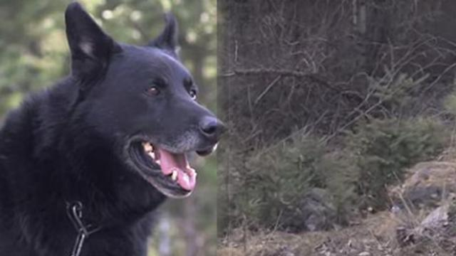 Dog fights off coyotes and protects teen for 2 days after harrowing car crash – wins big award