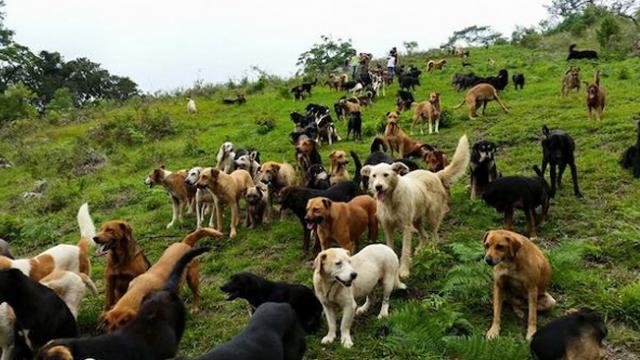 'Land of stray dogs' is heavenly refuge for hundreds of stray dogs