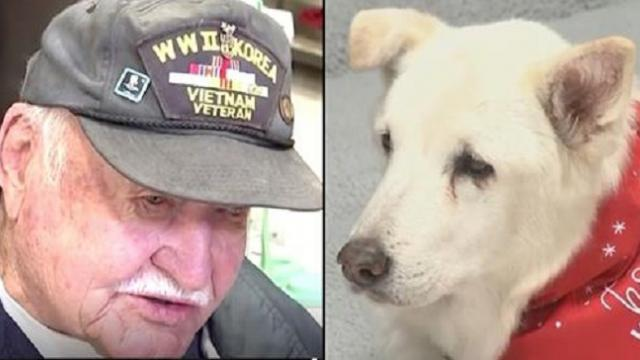 War Veteran Saves 13-Year-Old Dog On Euthanasia List