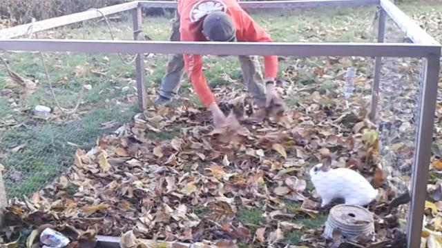 Video of tiny rescued rabbit discovering the joy of playing in leaves is melting everyone's heart