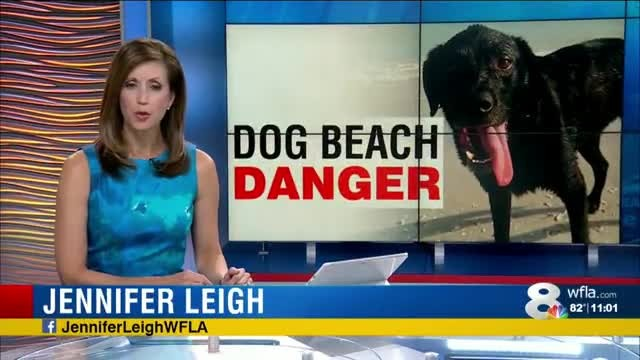 After Dog Dies From From Day At The Beach, Owner Wants To Warn Others To Not Make Same Mistake