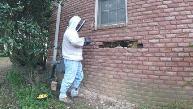 Homeowners call man to help with bee problem Discovery under