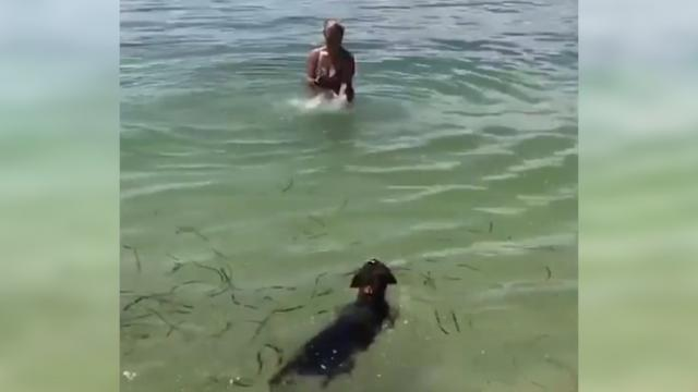 A cute puppy teaches his little sister swim and sure you don't want to miss it!