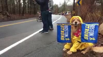 Dog spends his monday cheering on runners at Boston Marathon 2