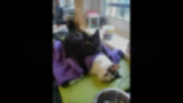 Incredible nurse cat from Poland looks after other animals at animal shelter – even dogs!