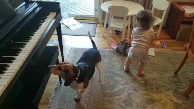 Rescue dog & tiny 'backup dancer' have cutest jam session in adorable home video