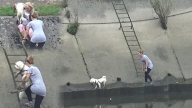 Moment woman scrambles up steep Thames Embankment with pet in her arms after dramatic rescue