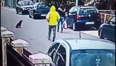 """Heroic stray dog saves woman by barking and chasing away robber """