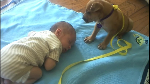 Baby falls asleep as mom captures footage of puppy's actions that go viral