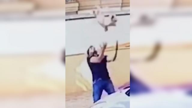 Dog falls over 100 feet from balcony, hero passersby makes life-saving catch