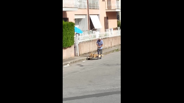 Man walks arthritis-stricken 13-year-old dog everyday — and touches hearts worldwide
