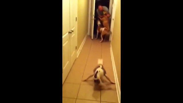 Special Needs Dog Waited Months For Dad To Return, Shocks Her Family When She Greets Him