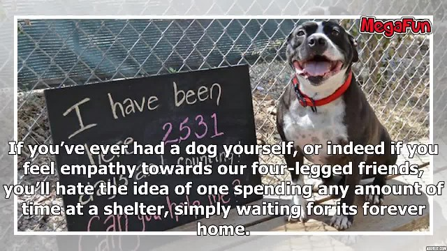 Dog Sits At Shelter For 2,531 Days Waiting For Loving Human – Tearjerking Video Changes Everything