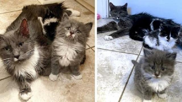 Cat keeps her kittens safe from winter cold before they are rescued from the street