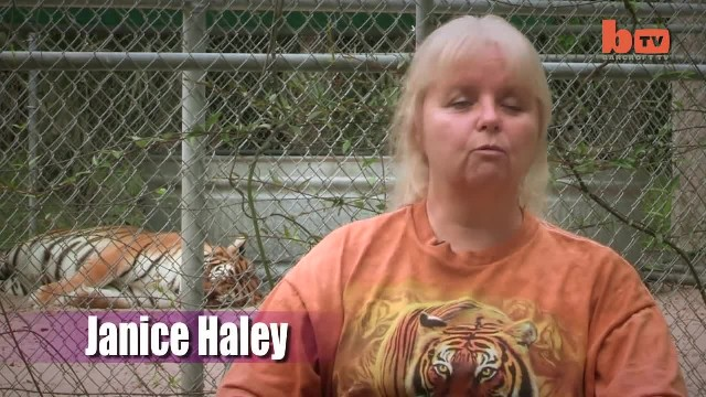 Woman Keeps Two Pet Tigers In Her Backyard – And They're As Loving And Playful As Kittens