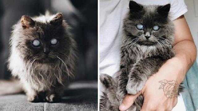 Men went to adopt a kitten but a beautiful blind kitty found them instead