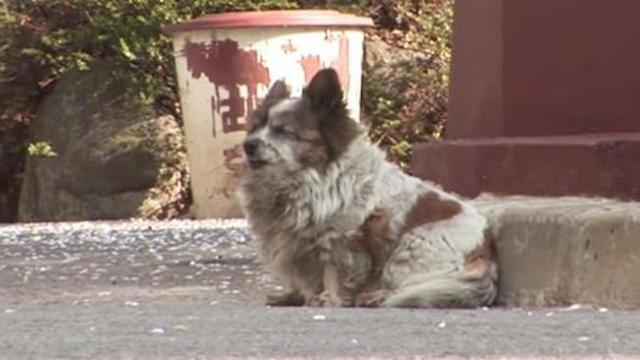 Confused pup didn't know owner was abandoning her, waits 10 years for his return