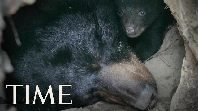 Father And Son Caught On Video Killing A Black Bear And Her Cubs In Alaska, Police Say _ TIME
