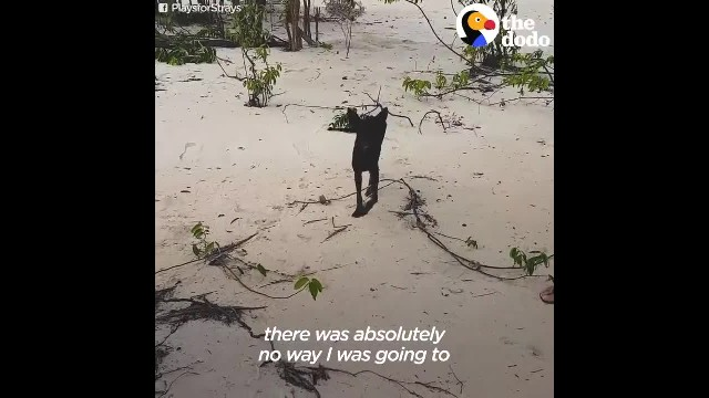 Man On Cruise in Amazon Jungle Finds Dog On Deserted Island and Rescues Her
