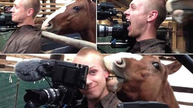 Quit horsing around! Cameraman tries to concentrate while he gets kissed and nibbled by an attention